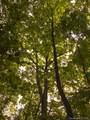 LOT 50 A Oak View Lane - Photo 7