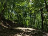 117 Mountain Lily Ridge Road - Photo 14