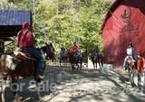 99 Ginseng Trail - Photo 22