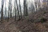 38.54 acres Sams Branch Road - Photo 20