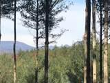 52 Broadleaf Trail - Photo 3