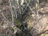 0000 Spring Cove Road - Photo 16
