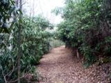 Lot #49-3 Cherokee Ridge - Photo 11