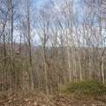 6 Cinnamon Ridge - Photo 13
