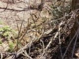 Lot 4 Liner Creek Road - Photo 34