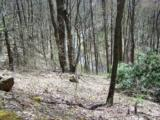 Lot 284 Running Deer Trail - Photo 41