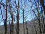 Lot 284 Running Deer Trail - Photo 45