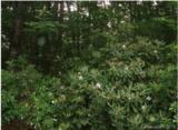 3 White Oak Terrace - Photo 2