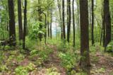 000000 Mcalpine Mountain Road - Photo 9