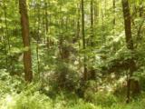 V/L Mountain Crest Drive - Photo 6
