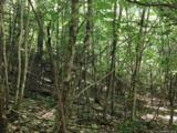 LOT 57 Clear Spring Trail - Photo 2