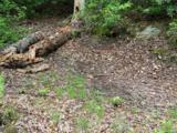 999 Lost Mine Trail - Photo 14