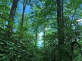 12B Gladiola Drive - Photo 7