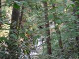 Lot 19 Ostin Creek Trail - Photo 11
