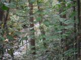 Lot 19 Ostin Creek Trail - Photo 12