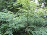 Lot 10 Pointer Trail - Photo 1
