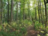 19.97 Acres Scout Camp Road - Photo 43