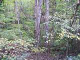 00 Scarlet Ridge - Photo 12