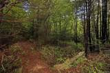 4151 Jeter Mountain Road - Photo 18