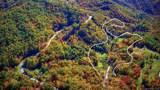 365 Hidden Hollow Falls Drive - Photo 3