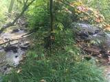 000 Moonshine Creek Trail - Photo 6