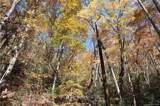 99999 Sequoia Trail - Photo 2