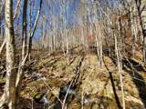 999 Scronce Creek Road - Photo 3