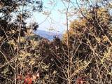 0 Camp Knob Road - Photo 20