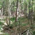 9.7 acres King Stepp Road - Photo 10