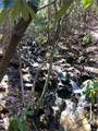 2.89 Acres Lady Slipper Trail - Photo 1