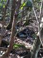 2.89 Acres Lady Slipper Trail - Photo 17