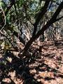 2.89 Acres Lady Slipper Trail - Photo 6