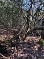 2.89 Acres Lady Slipper Trail - Photo 10