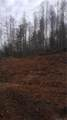 0000 Puncheon Fork Road - Photo 22