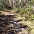 10 Black Bear Lane - Photo 1