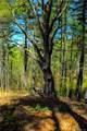 309 Acres Mountainbrook Road - Photo 8