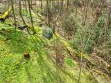 583 Woods Mountain Trail - Photo 8