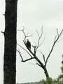145 Kingfisher Court - Photo 43