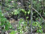 3511 Willow Creek Road - Photo 26