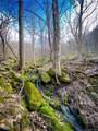 000 Metcalf Creek Loop - Photo 1