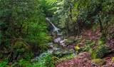 1221 Arborcrest Way - Photo 17