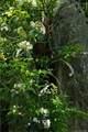1 Horned Owl Lane - Photo 17
