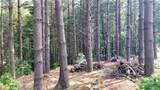 Fraser Fir Trail - Photo 11