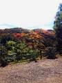 191 Panther Springs Gap Road - Photo 48