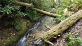 81 Creekside Loop - Photo 33