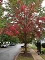 157 Water Oak Drive - Photo 7