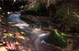 Tract 71 Whitetail Trail - Photo 3