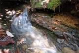 Tract 71 Whitetail Trail - Photo 10