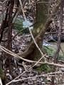 9999 Lazy Bear Trail - Photo 2