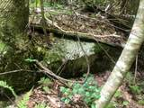TBD Silver Maple Trail - Photo 7